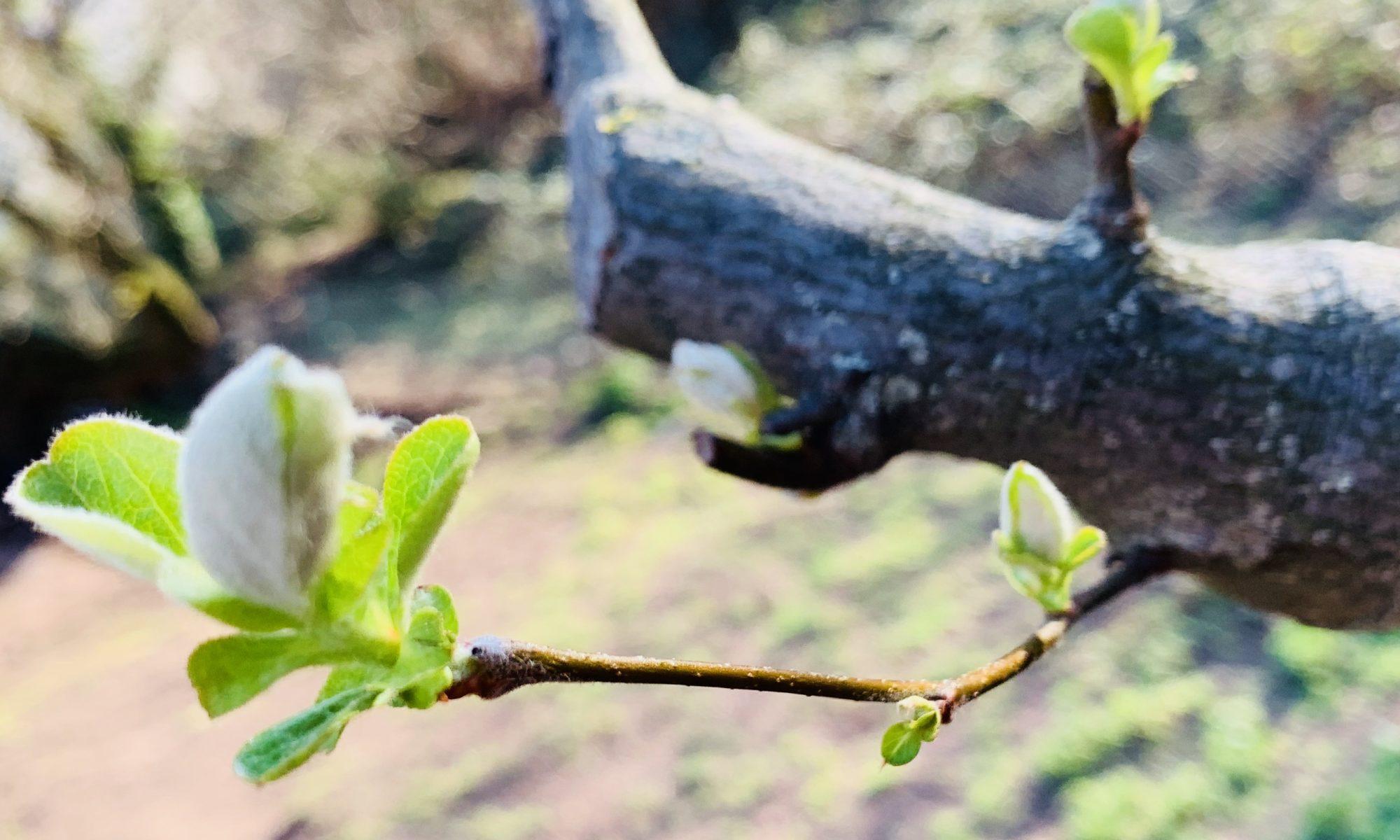AS TreeCare | Baum- & Landschaftspflege