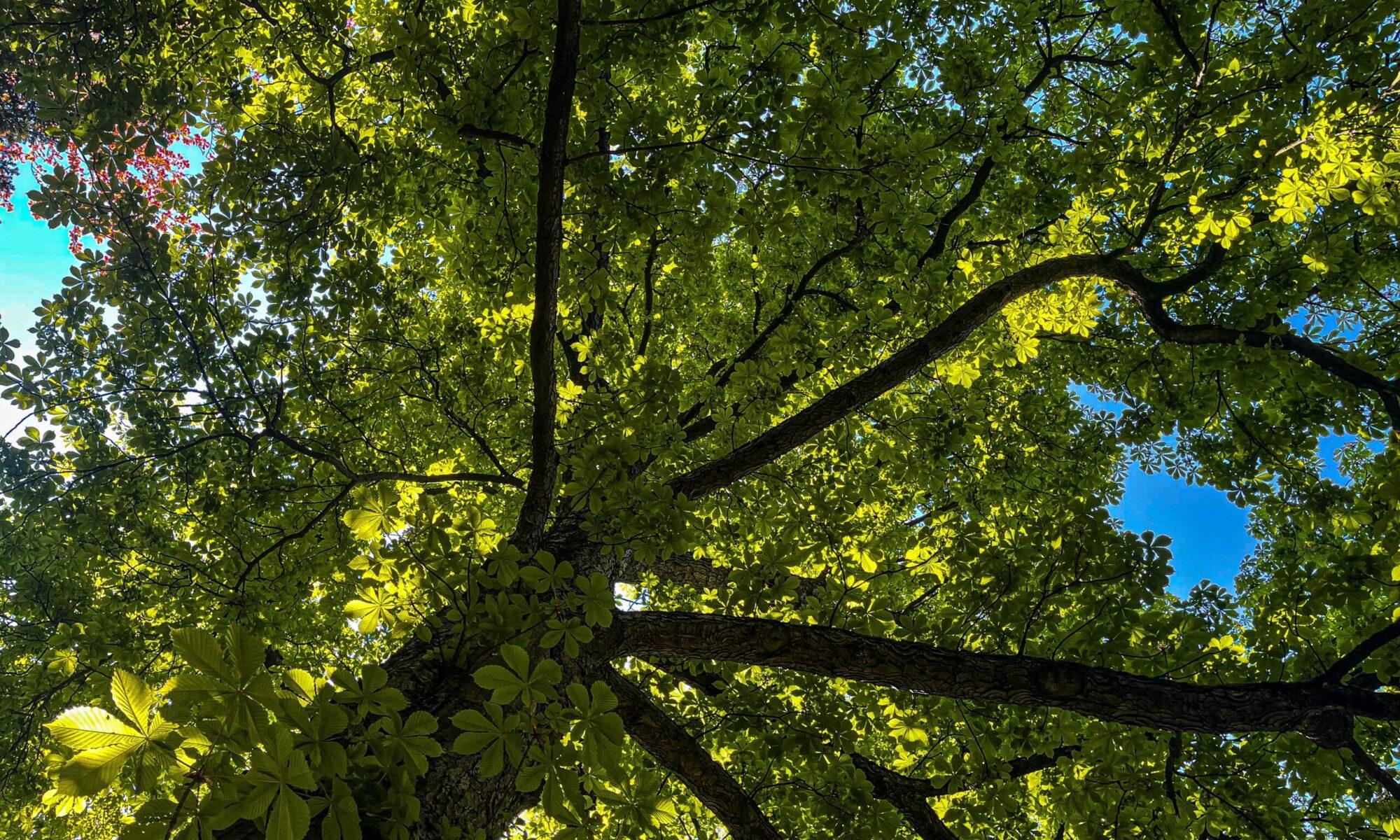 AS TreeCare   Baum- & Landschaftspflege